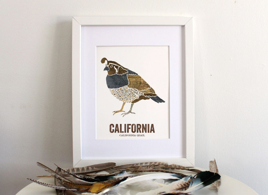 California_Quail_CA_Gallery_Comp_H-2
